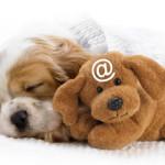 Что означает «электронная собака»?