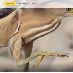 Яндекс фото — функционал